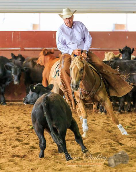 NM Cutting Horse-6840