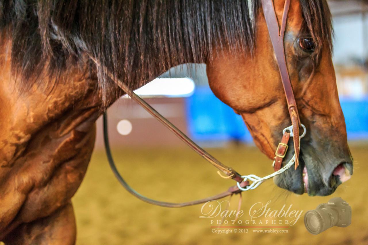 NM Cutting Horse-6885