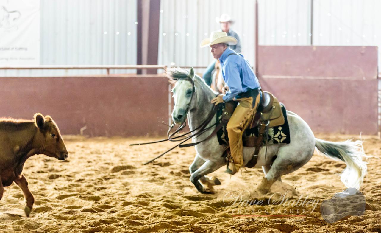 NM Cutting Horse-6740