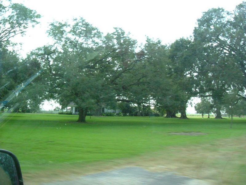 0138_Trees_1