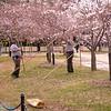 Tree pruners