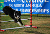 Dogs On Course in North America National Championships<br /> <br /> AJ