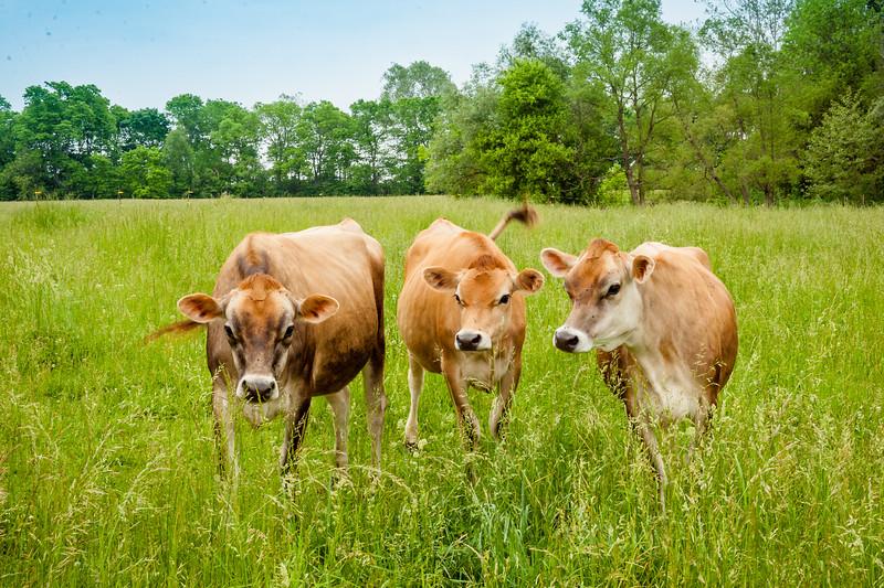 eggleton farm-dad-8849