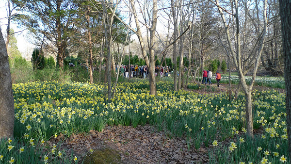 2012 Daffodil Party for DNRT Members