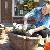 Planting flower downtown