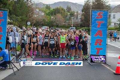 Dove Dash 2014