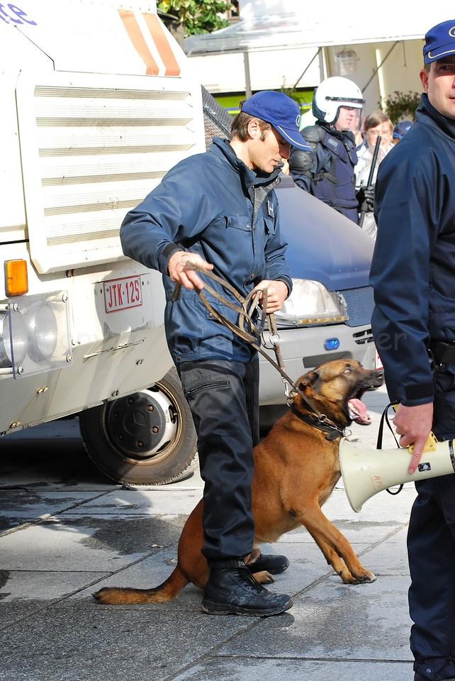 A police dog, kept ready during a manifestation.