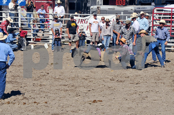 -Messenger photo by Joe Sutter<br /> <br /> Paton Gassord, 6, of Grimes, tries an unusual backwards approach in the mutton bustin' event, which does not really pay off for her. The winner, Nels Hanson, 7, of Radcliff, rode forwards.