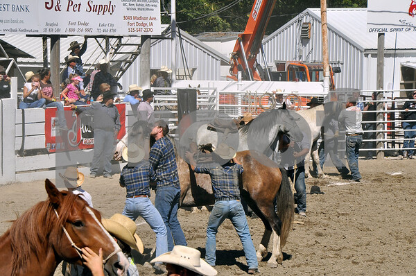 -Messenger photo by Joe Sutter<br /> <br /> Shawn Weimers bites his horse's ear, holding it down while he and his partners Shawn Lawler and Brian Nelson try to get a saddle and rider onto the animal's back during the wild horse race event.