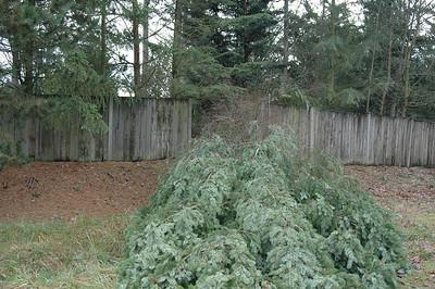 Dec 2006  Winter Storm Woodinville WA