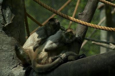 zoo 174