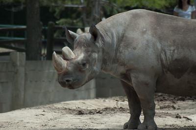 zoo 110