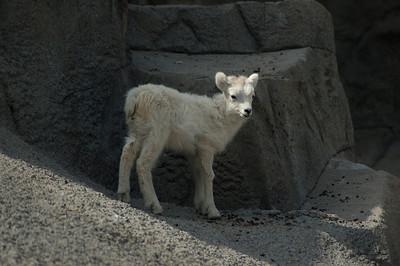 zoo 197