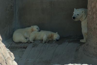 zoo 039