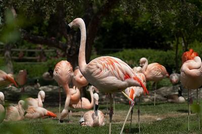 zoo 155