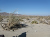 Looking back towards Ocotillo.
