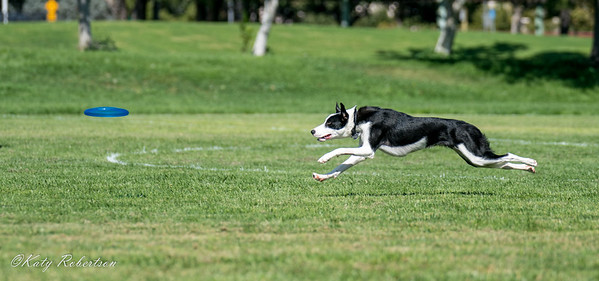 Disc Dogs - 9-8-18