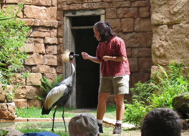 <b>Bird Show in Animal Kingdom</b>   (Apr 23, 2005, 11:51am)