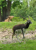 <b>Antelope in Animal Kingdom</b>   (Apr 23, 2005, 12:48pm)