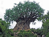 <b>Tree of Life</b>   (Apr 23, 2005, 01:07pm)