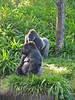 <b>Gorillas</b>   (Apr 23, 2005, 08:54am)