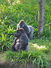 <b>Gorillas</b>   (Apr 23, 2005, 08:54am)