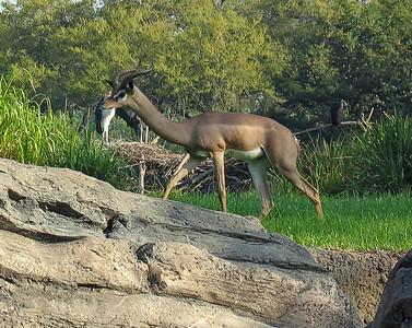 Antelope   (Apr 23, 2005, 08:50am)