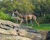 <b>Antelope</b>   (Apr 23, 2005, 08:50am)