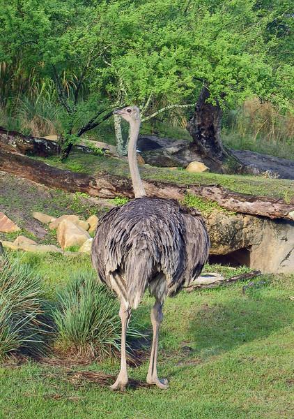<b>Ostrich</b>   (Apr 23, 2005, 08:27am)
