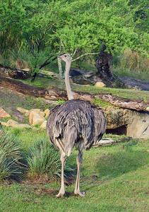 Ostrich   (Apr 23, 2005, 08:27am)