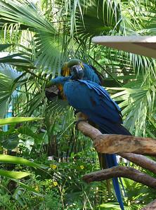 Parrots   (Apr 23, 2005, 09:28am)