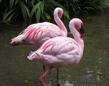 Flamingos   (Apr 23, 2005, 01:11pm)