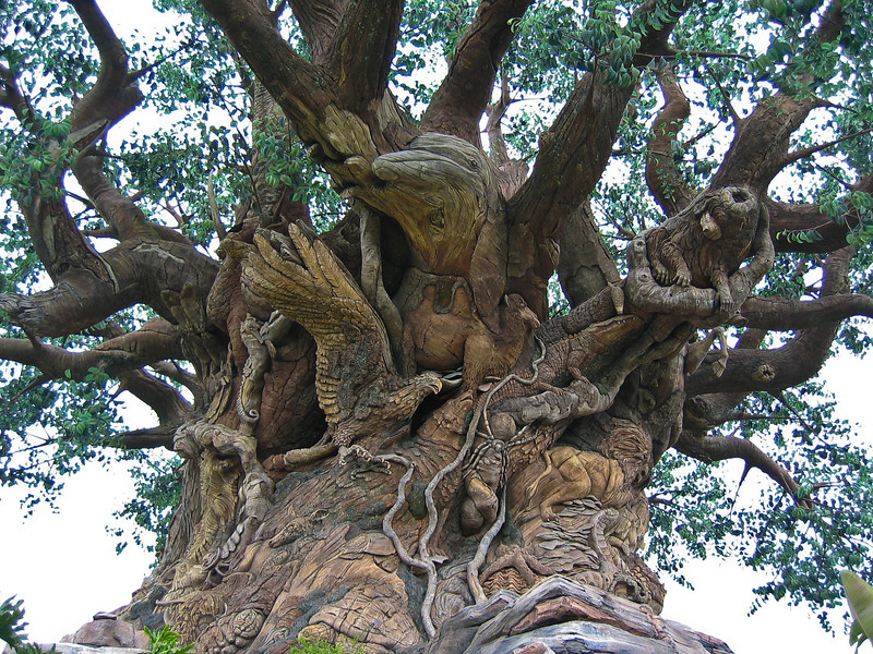 <b>Top of the Tree of Life</b>   (Apr 23, 2005, 01:18pm)