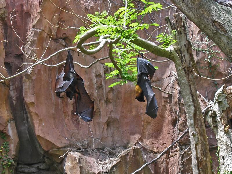 <b>Sleeping Bats</b>   (Apr 23, 2005, 12:41pm)