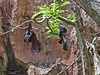<b>Sleeping Bats</b>   (Apr 23, 2005, 12:41pm)