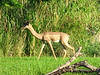 <b>Another Antelope</b>   (Apr 23, 2005, 08:50am)