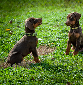 Jane Pups 8 Weeks ,January 19, 2020,-58