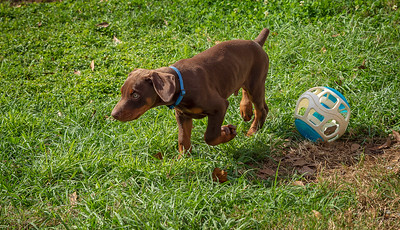 Jane Pups 8 Weeks ,January 19, 2020,-193