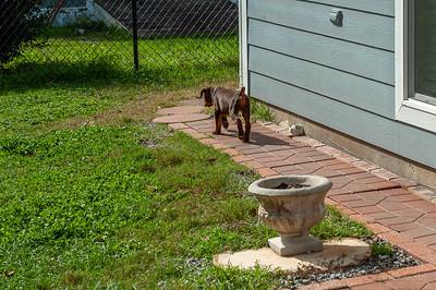 Jane Pups 8 Weeks ,January 19, 2020,-83