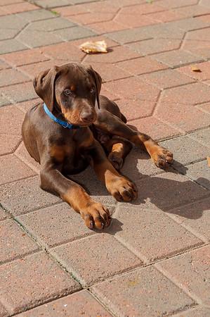 Jane Pups 8 Weeks ,January 19, 2020,-184