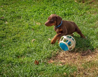 Jane Pups 8 Weeks ,January 19, 2020,-190