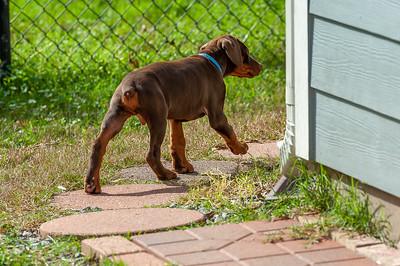 Jane Pups 8 Weeks ,January 19, 2020,-86