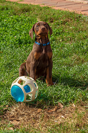 Jane Pups 8 Weeks ,January 19, 2020,-188