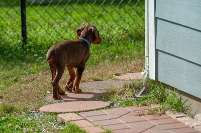 Jane Pups 8 Weeks ,January 19, 2020,-80