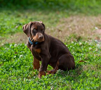 Jane Pups 8 Weeks ,January 19, 2020,-54