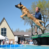 T-Rex, a Belgian Malinois had the 4th overall longest jump of the weekend with a 22'3.