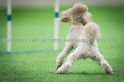 Dog Agility Trials_20131215-158