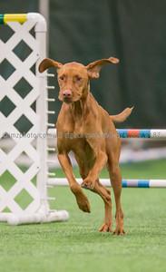 Dog Agility Trials_20131215-25
