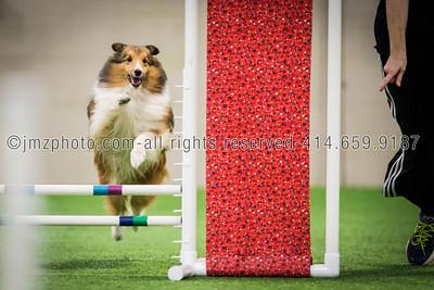 Dog Agility Trials_20131215-131