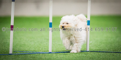 Dog Agility Trials_20131215-112